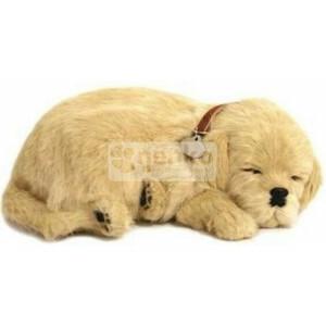 Schattig Huisdier Golden Retriever Puppy