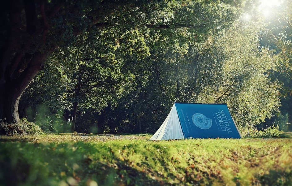 FieldCandy